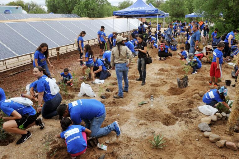 Instalan jardín para polinizadores en el Centro Ecológico de Sonora